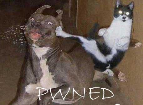 Cat Pwning